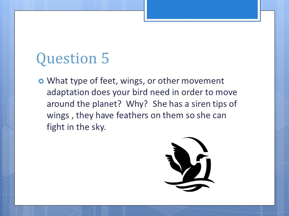 Question 5  What type of feet, wings, or other movement adaptation does your bird need in order to move around the planet? Why? She has a siren tips