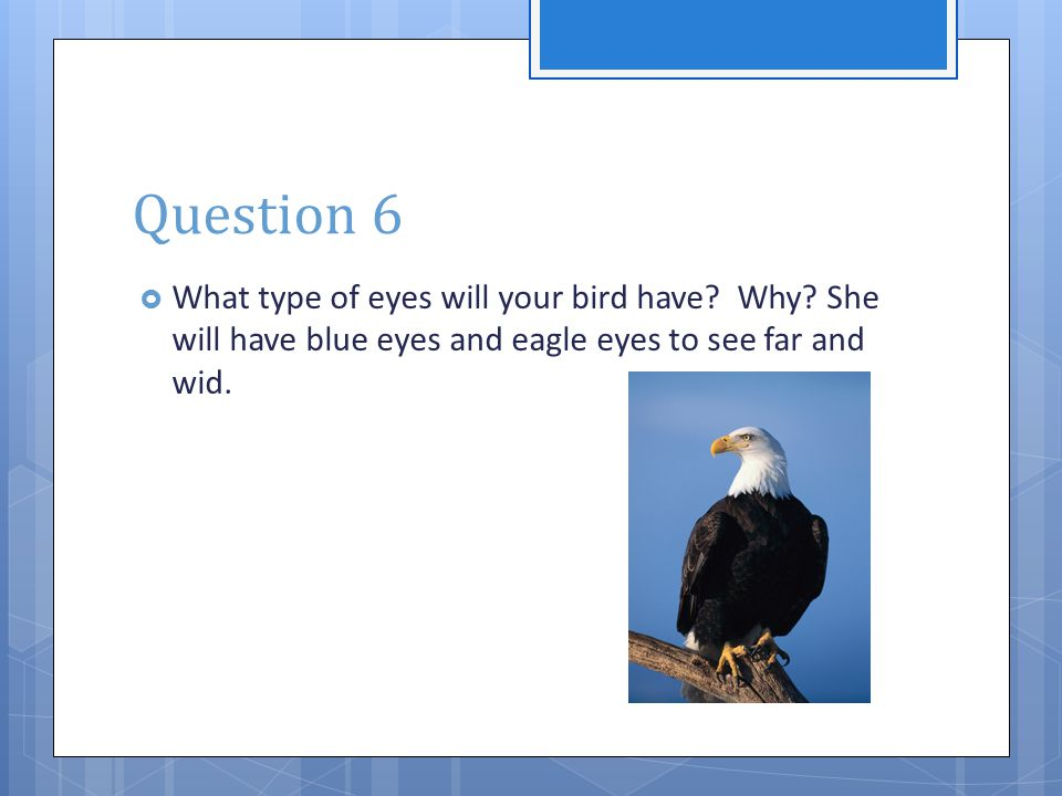 Question 6  What type of eyes will your bird have? Why? She will have blue eyes and eagle eyes to see far and wid.