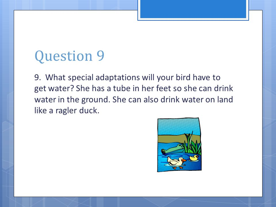 Question 9 9. What special adaptations will your bird have to get water? She has a tube in her feet so she can drink water in the ground. She can also