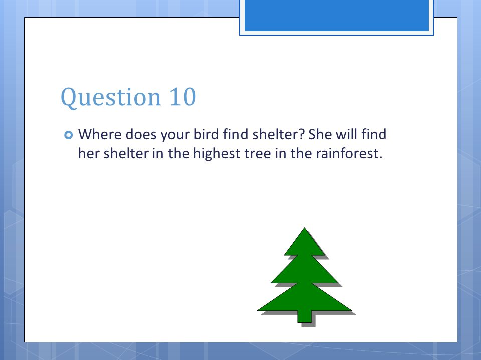 Question 10  Where does your bird find shelter? She will find her shelter in the highest tree in the rainforest.