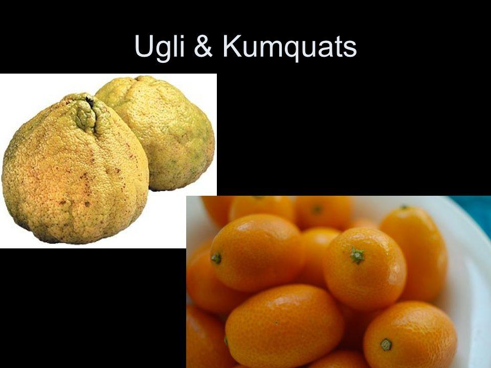 Ugli & Kumquats