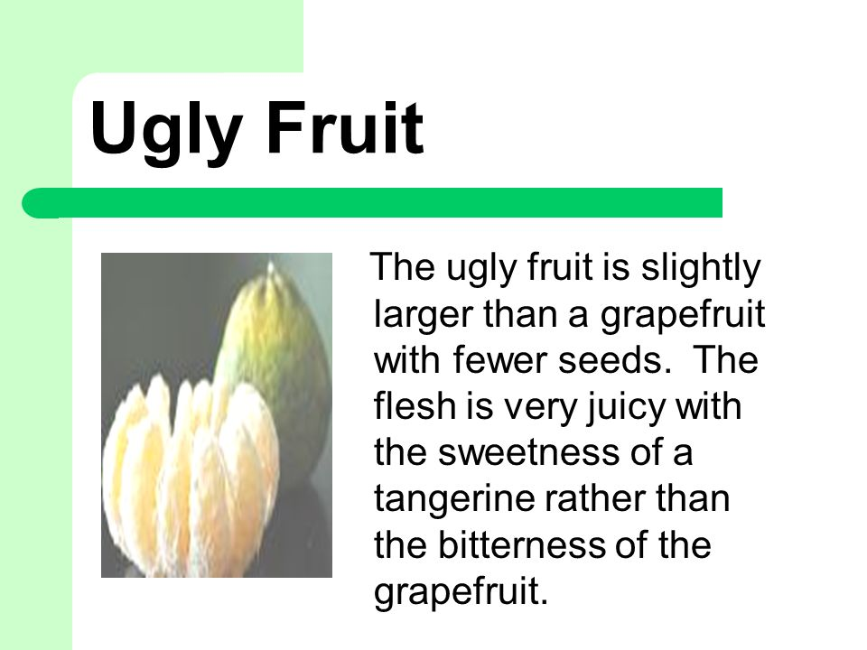 Ugly Fruit The ugly fruit is slightly larger than a grapefruit with fewer seeds.