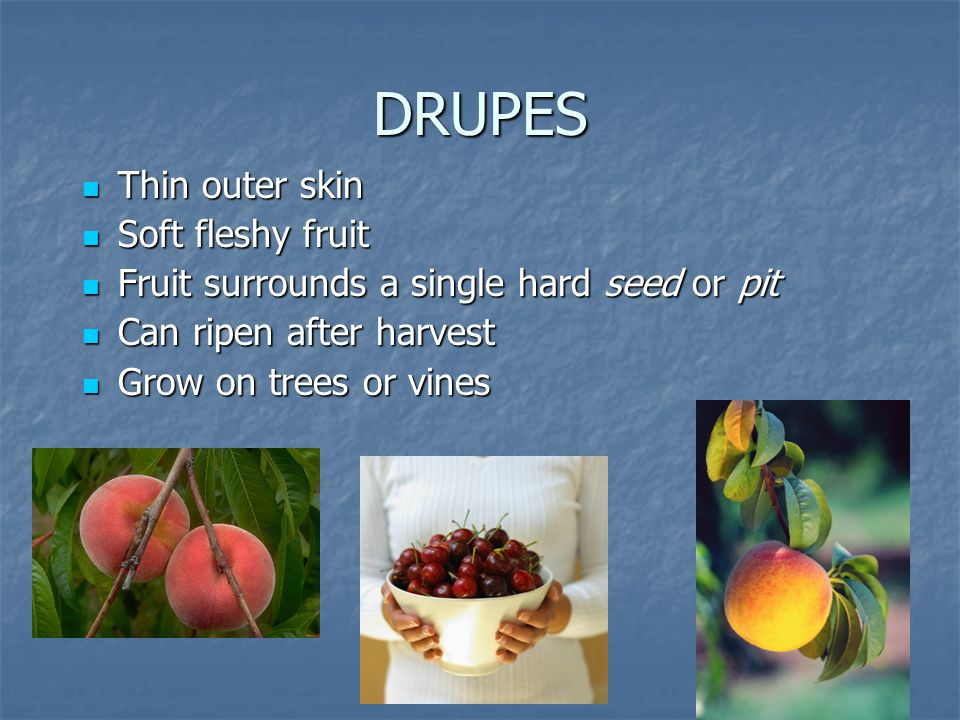 DRUPES Thin outer skin Thin outer skin Soft fleshy fruit Soft fleshy fruit Fruit surrounds a single hard seed or pit Fruit surrounds a single hard see