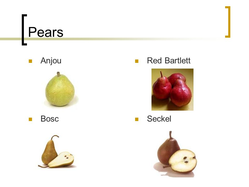 Pears Anjou Red Bartlett Bosc Seckel