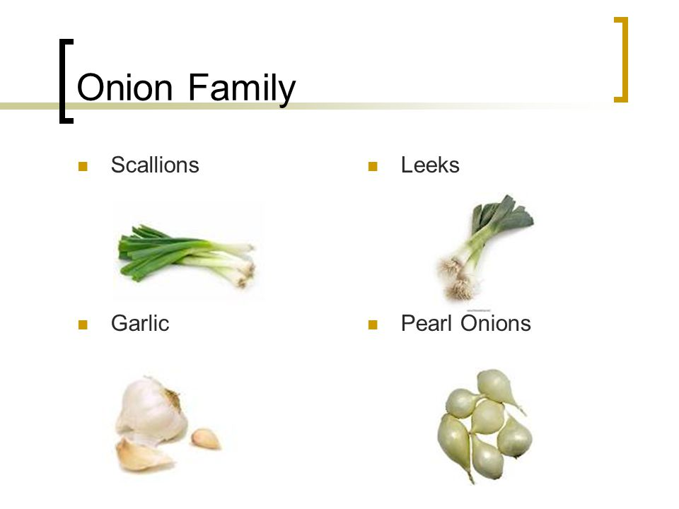 Onion Family Scallions Leeks Garlic Pearl Onions
