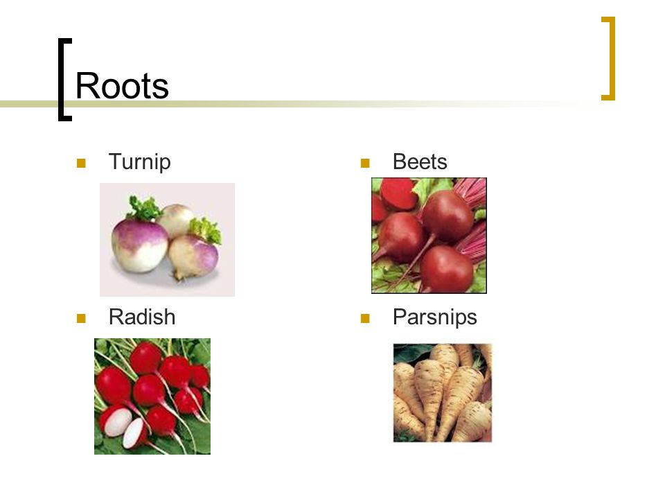 Roots Turnip Beets Radish Parsnips