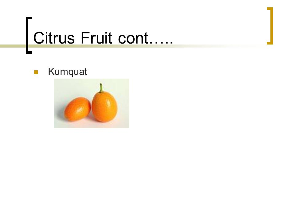 Citrus Fruit cont….. Kumquat