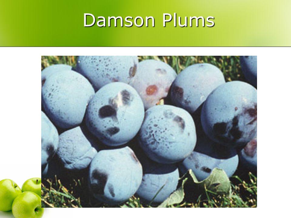 Damson Plums Damson Plums
