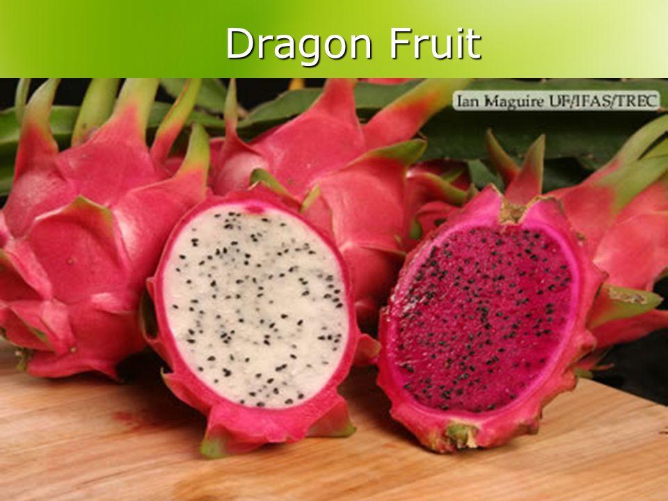 Dragon Fruit Dragon Fruit