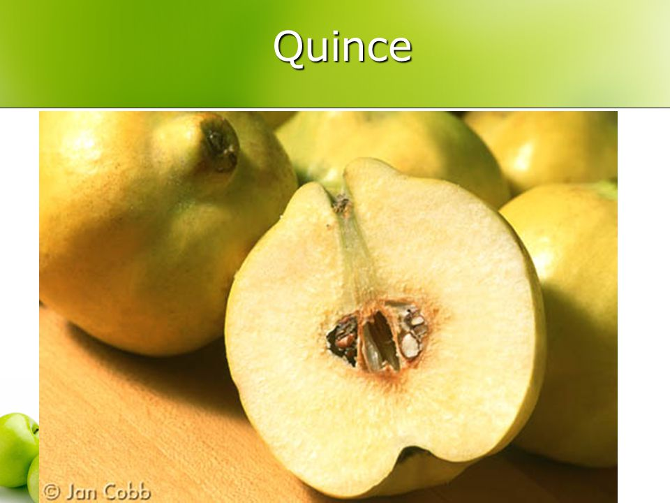 Quince Quince