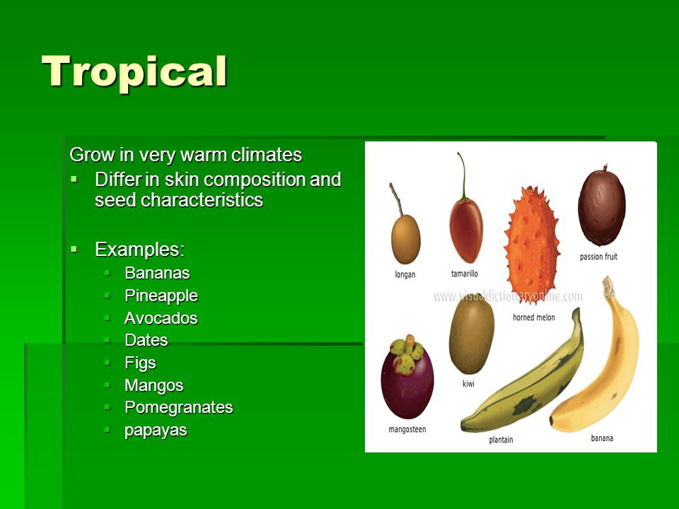 Tropical Grow in very warm climates  Differ in skin composition and seed characteristics  Examples:  Bananas  Pineapple  Avocados  Dates  Figs  Mangos  Pomegranates  papayas