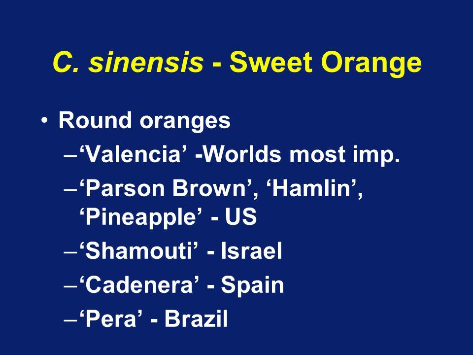 C. sinensis - Sweet Orange Round oranges –'Valencia' -Worlds most imp. –'Parson Brown', 'Hamlin', 'Pineapple' - US –'Shamouti' - Israel –'Cadenera' -