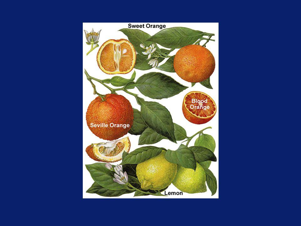 Lemon Hybrids Lemonage (lemon x sweet orange) Lemonime (lemon x lime) Lemandrin (lemon x mandarin) Eremolemon (Eremocitrus x lemon) - Australian Desert Lemon