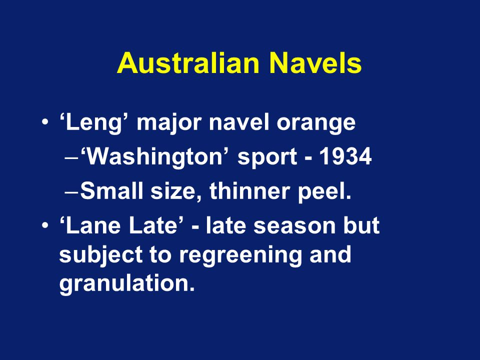 Australian Navels 'Leng' major navel orange –'Washington' sport - 1934 –Small size, thinner peel. 'Lane Late' - late season but subject to regreening