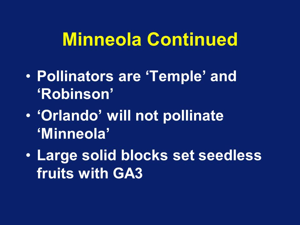 Minneola Continued Pollinators are 'Temple' and 'Robinson' 'Orlando' will not pollinate 'Minneola' Large solid blocks set seedless fruits with GA3