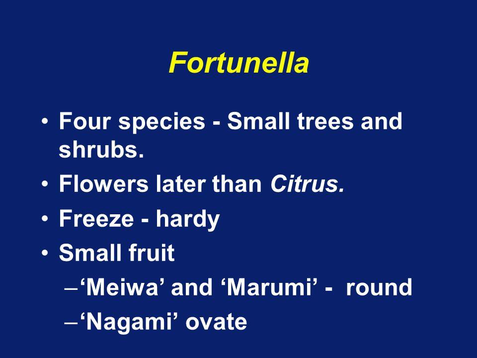 Poncirus Two trifoliate spp.