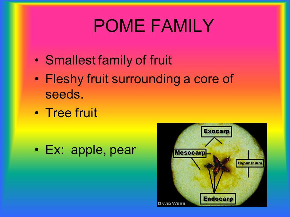 POME FAMILY Smallest family of fruit Fleshy fruit surrounding a core of seeds. Tree fruit Ex: apple, pear