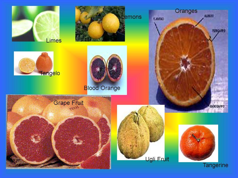 Limes Lemons Oranges Ugli Fruit Tangerine Grape Fruit Tangelo Blood Orange