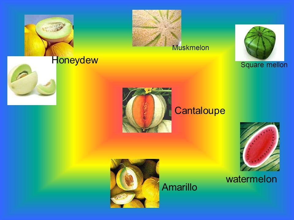 Amarillo Cantaloupe watermelon Square mellon Honeydew Muskmelon