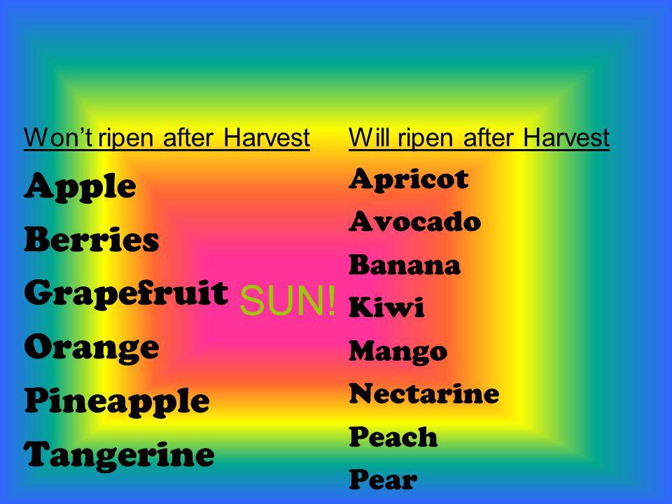 SUN! Won't ripen after Harvest Apple Berries Grapefruit Orange Pineapple Tangerine Will ripen after Harvest Apricot Avocado Banana Kiwi Mango Nectarin