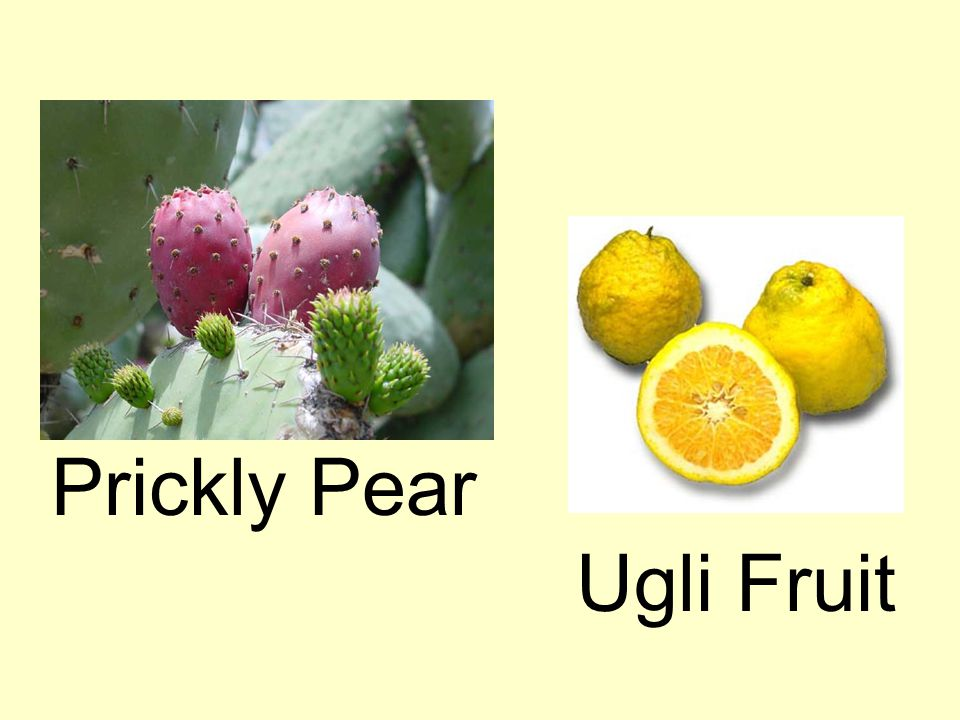 Prickly Pear Ugli Fruit