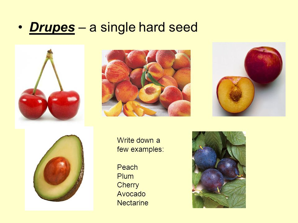 Drupes – a single hard seed Write down a few examples: Peach Plum Cherry Avocado Nectarine