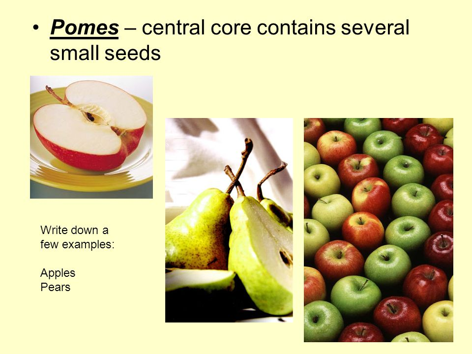 Pomes – central core contains several small seeds Write down a few examples: Apples Pears