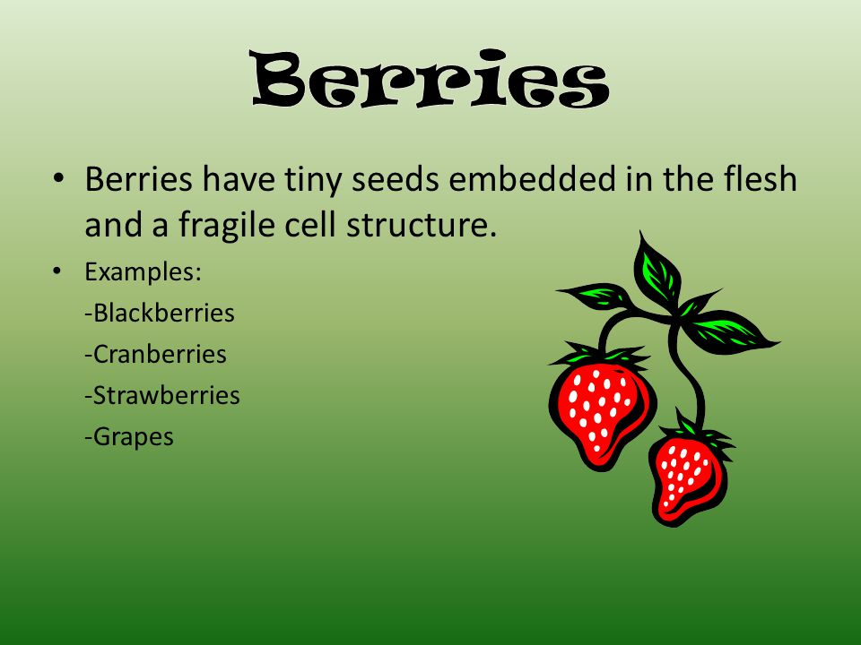 Berries have tiny seeds embedded in the flesh and a fragile cell structure.
