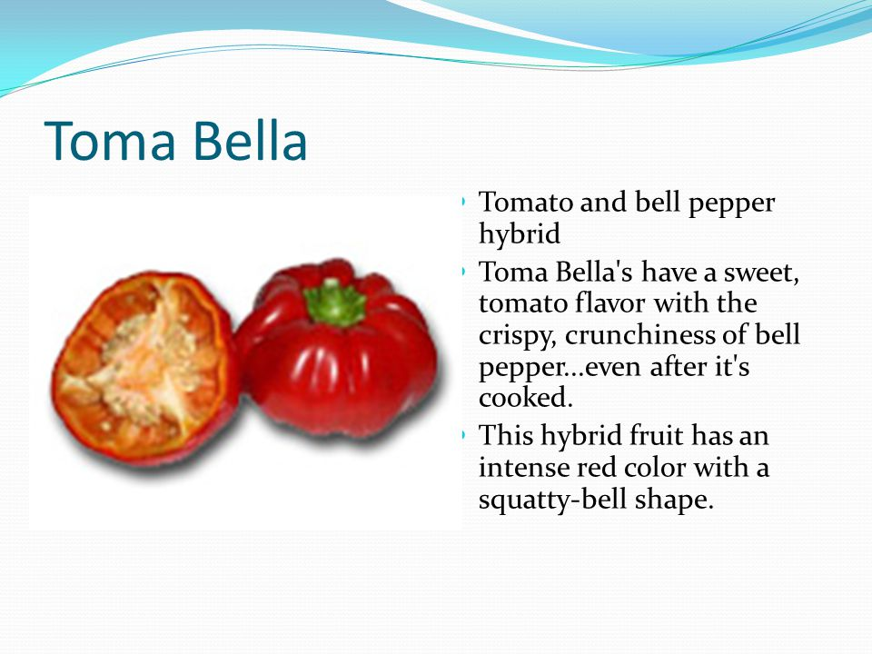 Toma Bella Tomato and bell pepper hybrid Toma Bella s have a sweet, tomato flavor with the crispy, crunchiness of bell pepper...even after it s cooked.