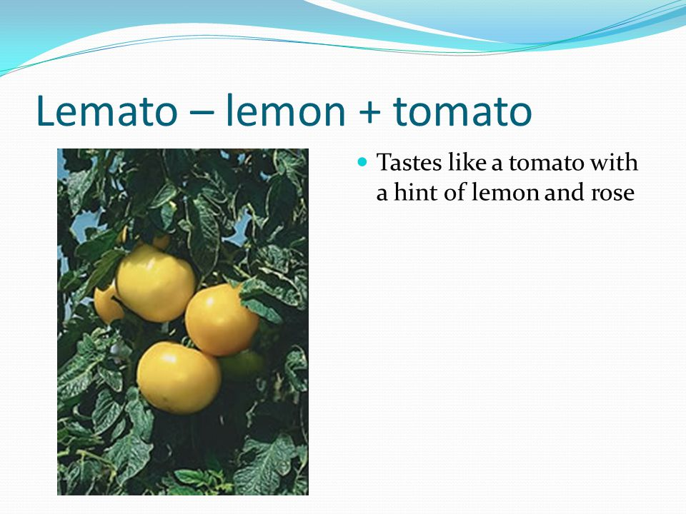 Lemato – lemon + tomato Tastes like a tomato with a hint of lemon and rose