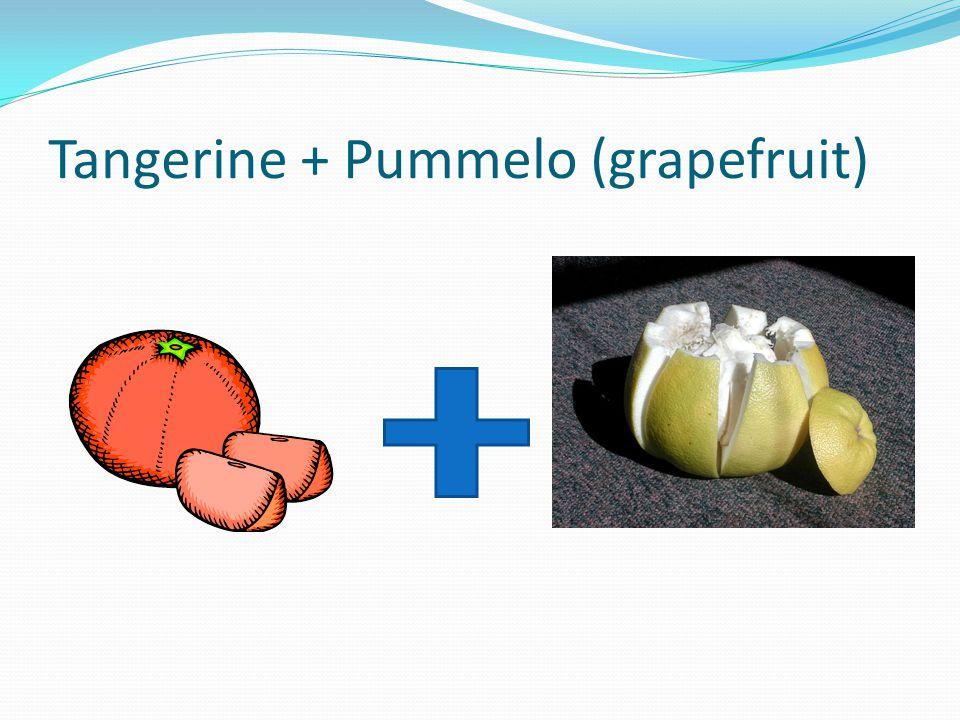 Tangerine + Pummelo (grapefruit)