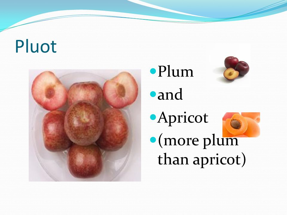 Pluot Plum and Apricot (more plum than apricot)