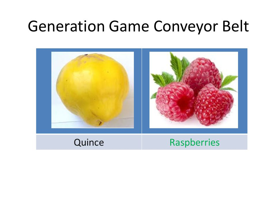 Generation Game Conveyor Belt QuinceRaspberries