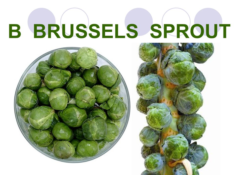 B BRUSSELS SPROUT