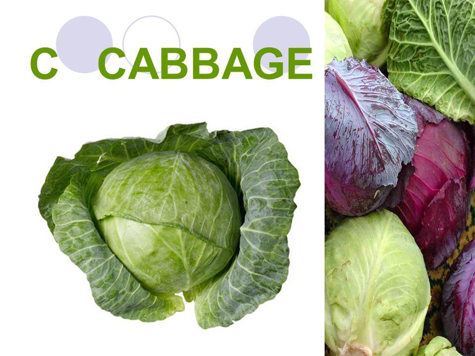 C CABBAGE