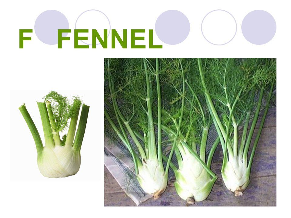 F FENNEL