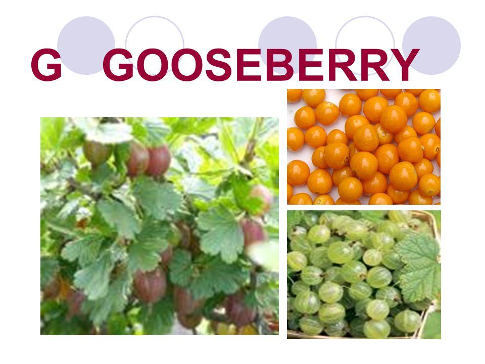 G GOOSEBERRY