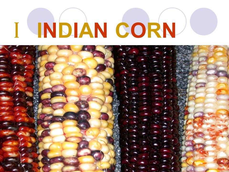 I INDIAN CORN