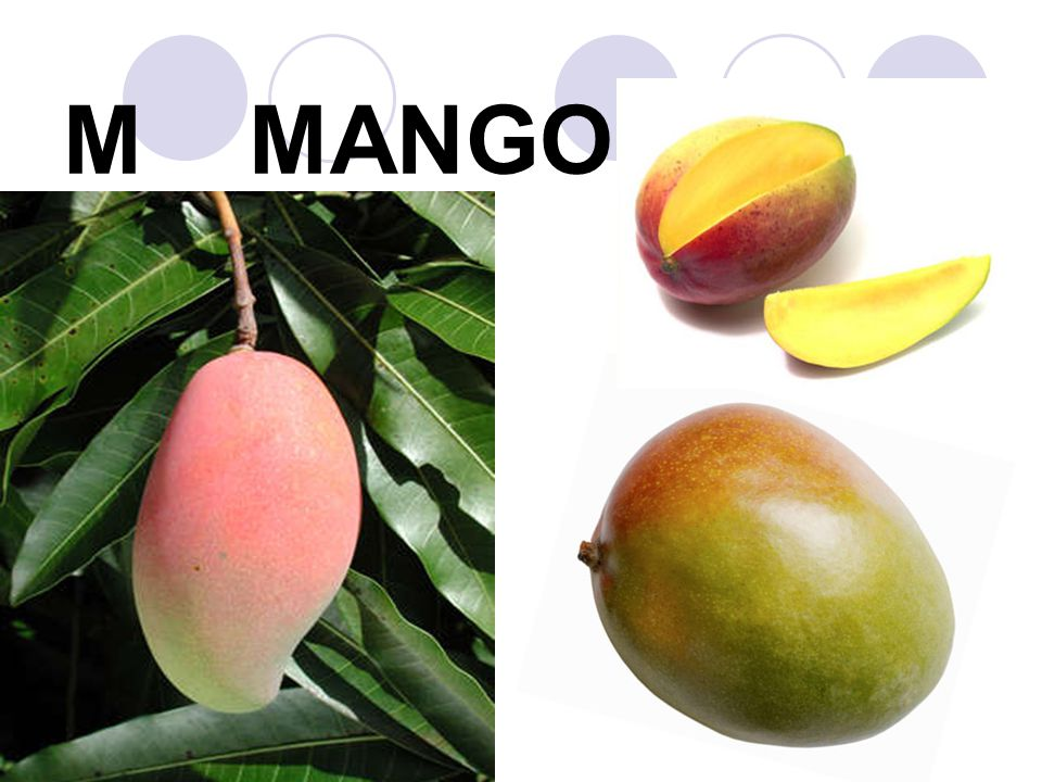 M MANGO