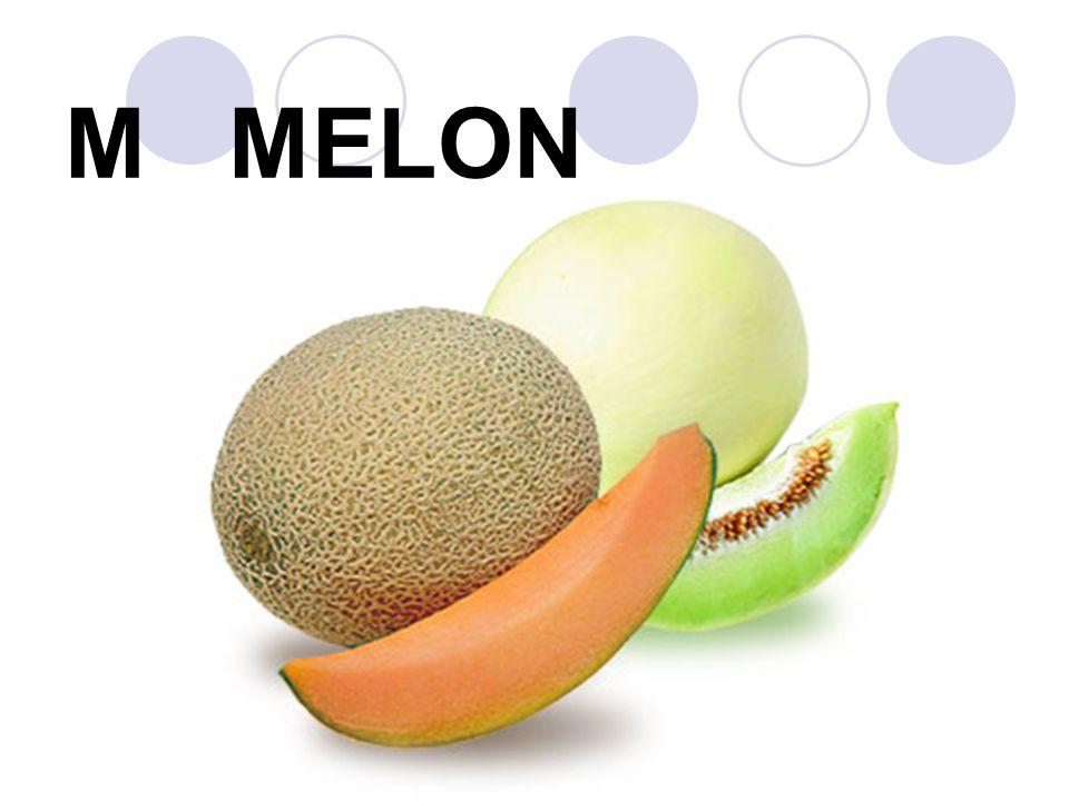 M MELON
