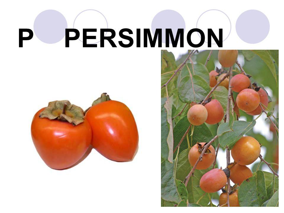P PERSIMMON