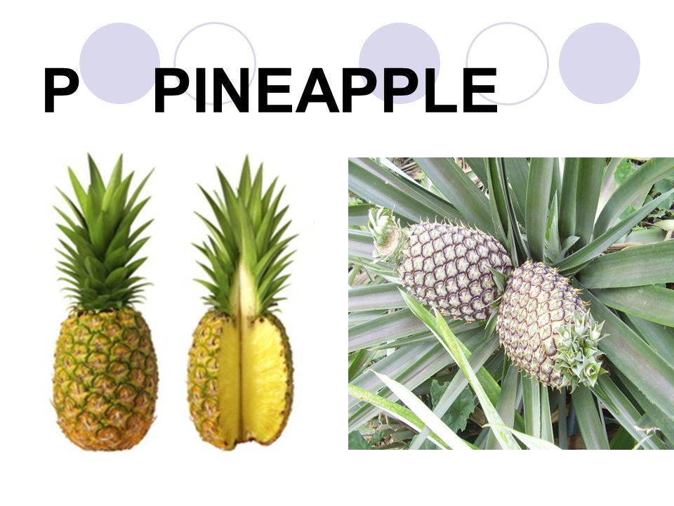P PINEAPPLE