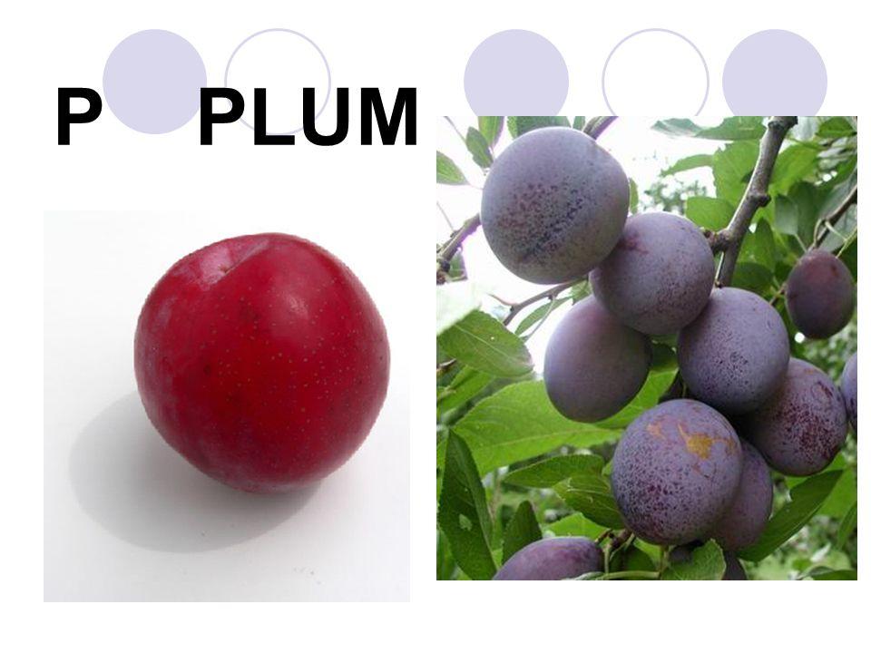 P PLUM