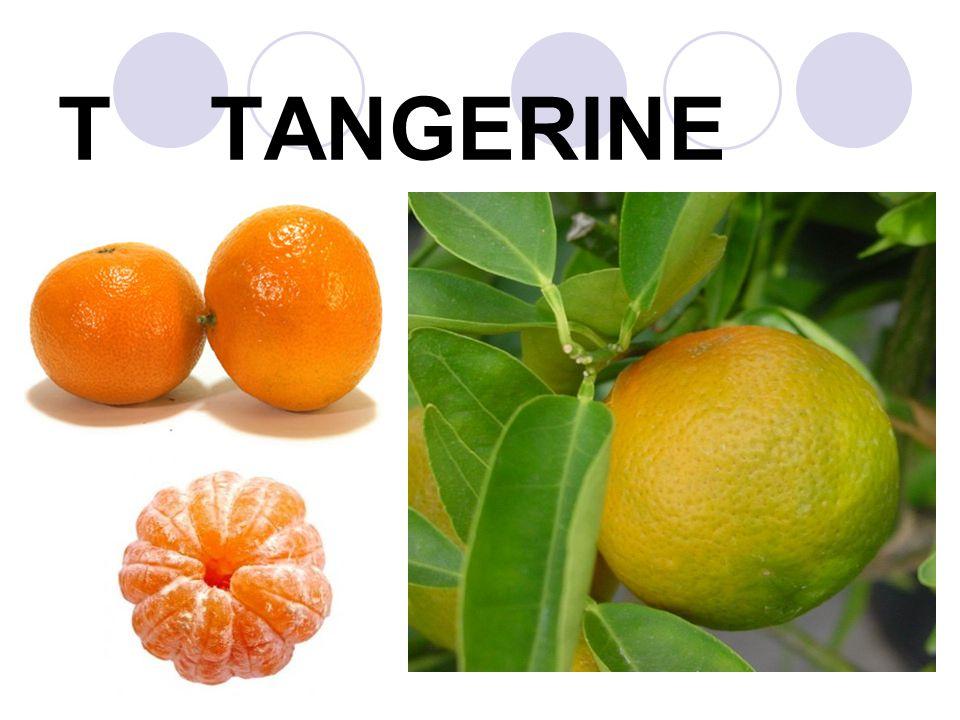 T TANGERINE