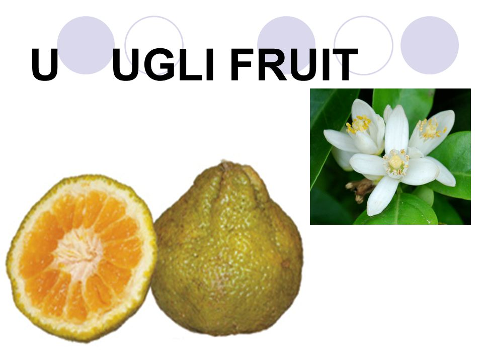 U UGLI FRUIT