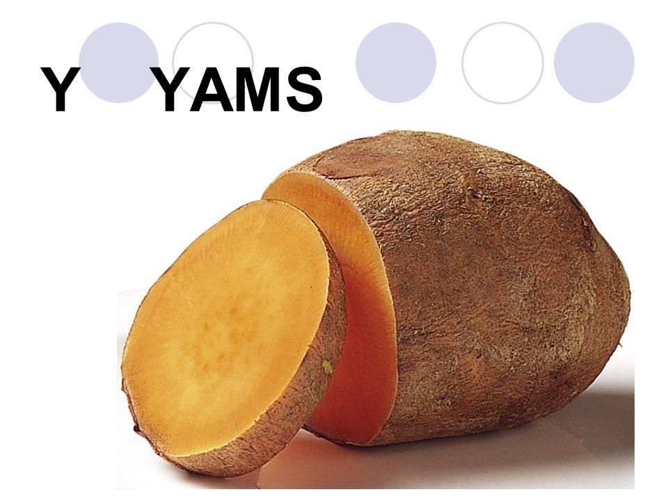 Y YAMS