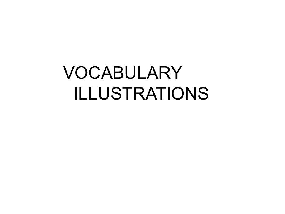 VOCABULARY ILLUSTRATIONS