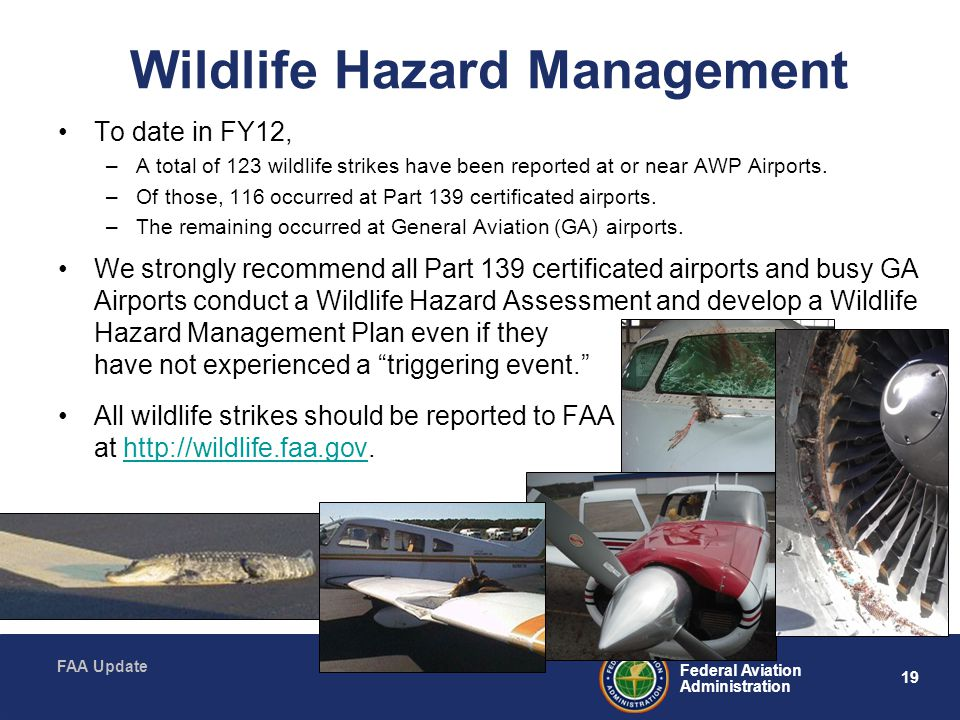 19 Federal Aviation Administration FAA Update Wildlife Hazard Management To date in FY12, –A total of 123 wildlife strikes have been reported at or near AWP Airports.
