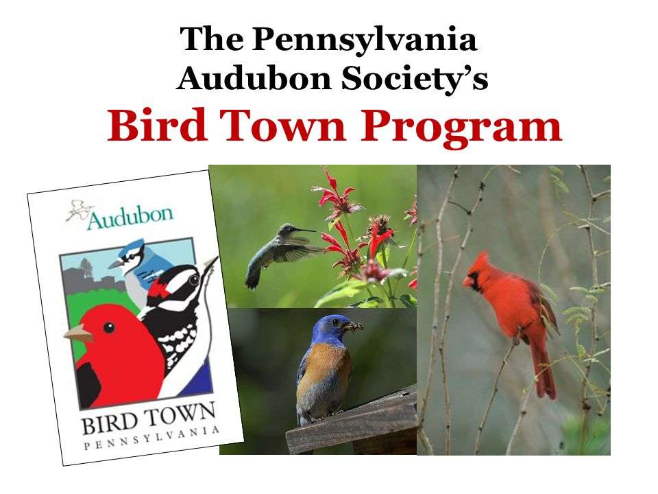 The Pennsylvania Audubon Society's Bird Town Program