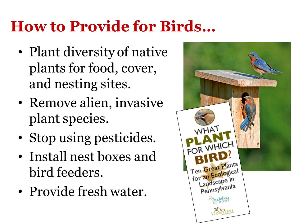 How to Provide for Birds… Plant diversity of native plants for food, cover, and nesting sites.